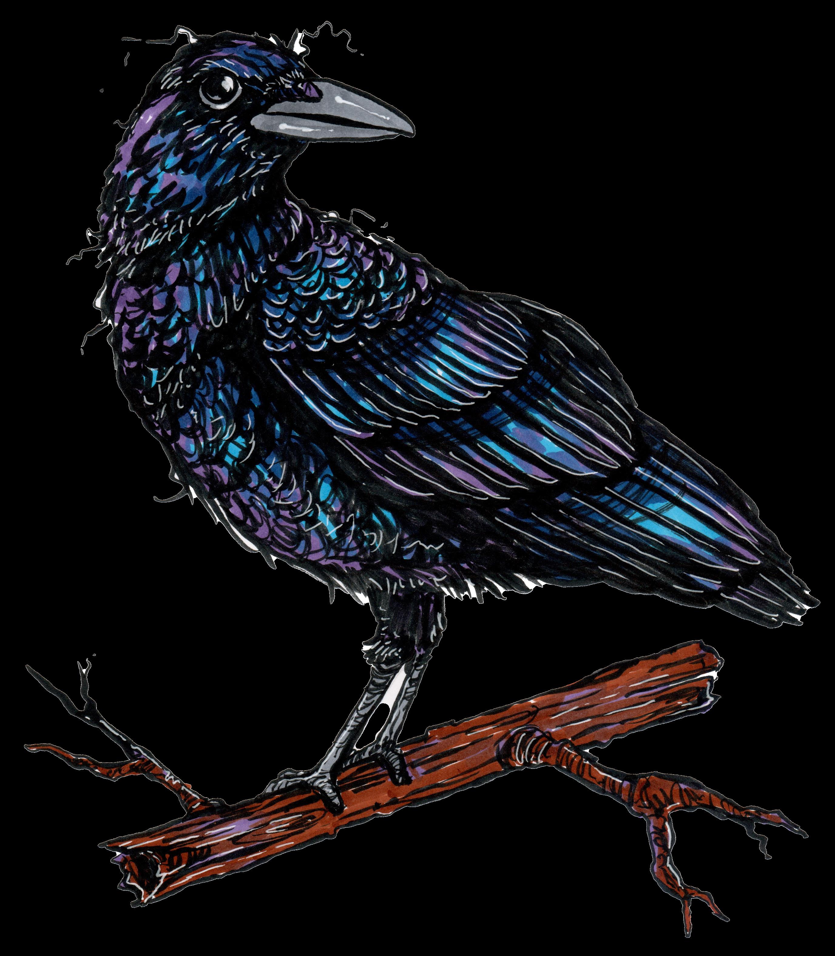 Paper Crow Blog