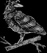 Paper Crow